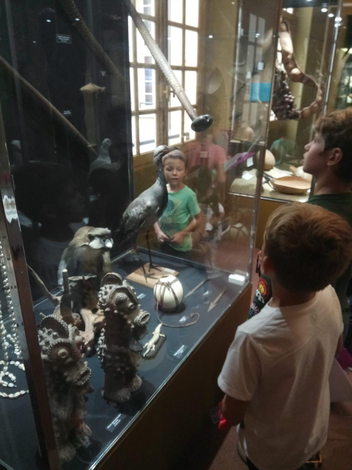 Museu Història Natural